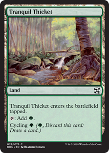 Bosque Sereno / Tranquil Thicket