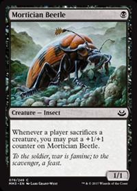Besouro Coveiro / Mortician Beetle
